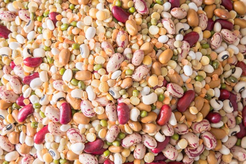 Разнообразие бобовыеых стоковое изображение rf