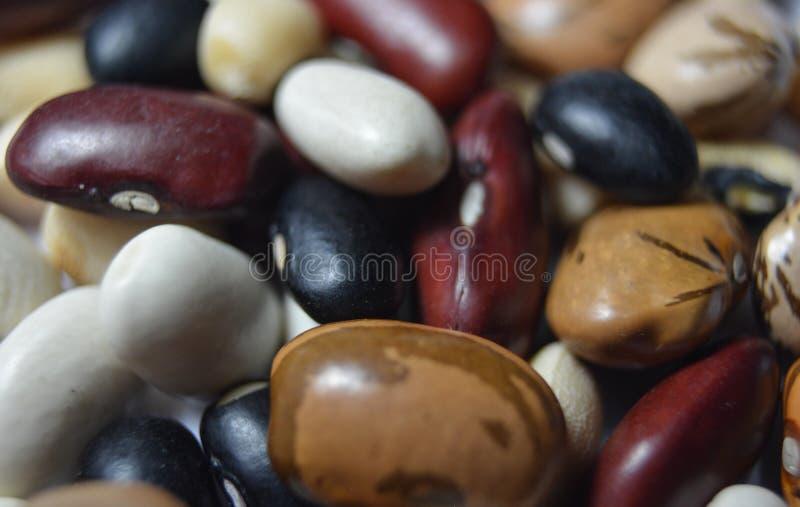 Разнообразие бобов, бобов, бобов, гороха стоковое фото