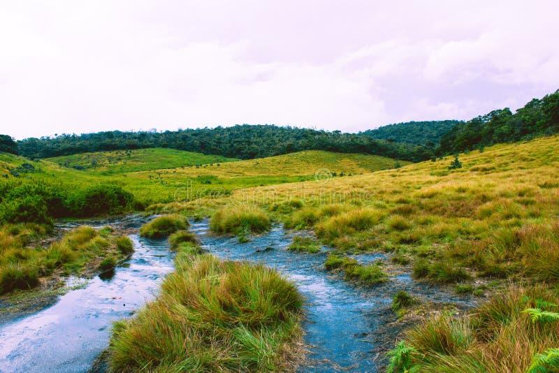 Разнообразие видов Horton упрощает национальный парк, Шри-Ланка стоковые изображения rf