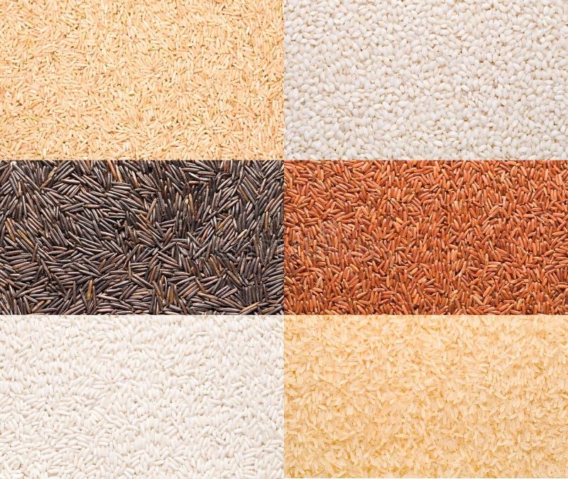 Разнообразие риса стоковая фотография