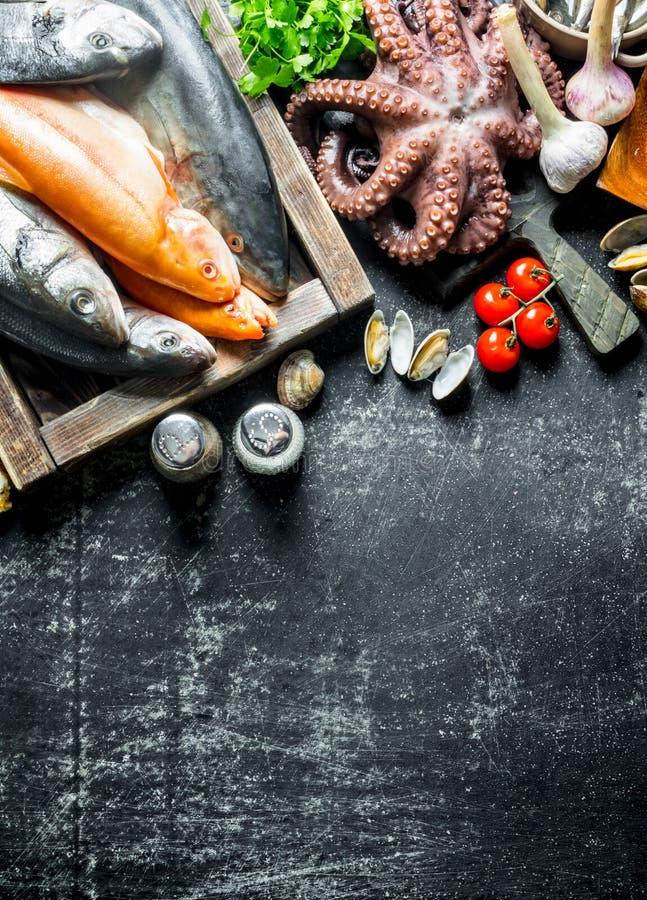 Разнообразие свежие рыбы, осьминог и устрицы стоковое фото rf