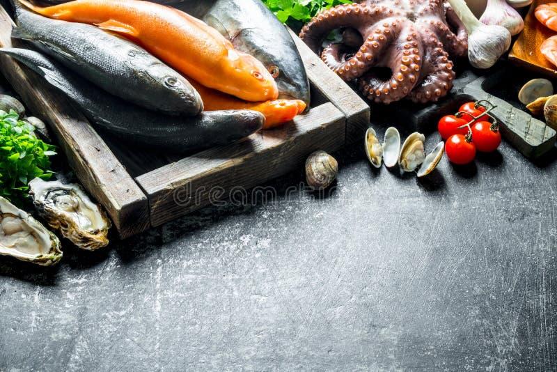 Разнообразие свежие рыбы, осьминог и устрицы стоковое изображение