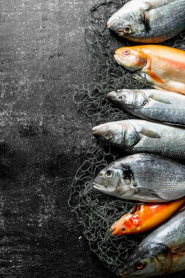 Разнообразие свежих рыб стоковые изображения rf