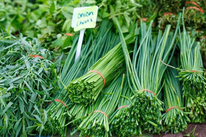 Разнообразие свежих целебных трав стоковые изображения rf
