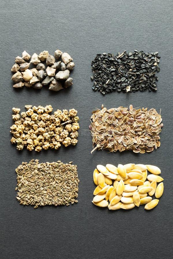 Разнообразие сухие семена на черной предпосылке: Вечер, салат, бурак, шпинат, лук, укроп, дыня, морковь, фенхель Вертикально стоковое фото