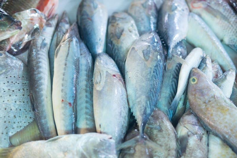 Разнообразие сырцовых свежих рыб стоковое изображение