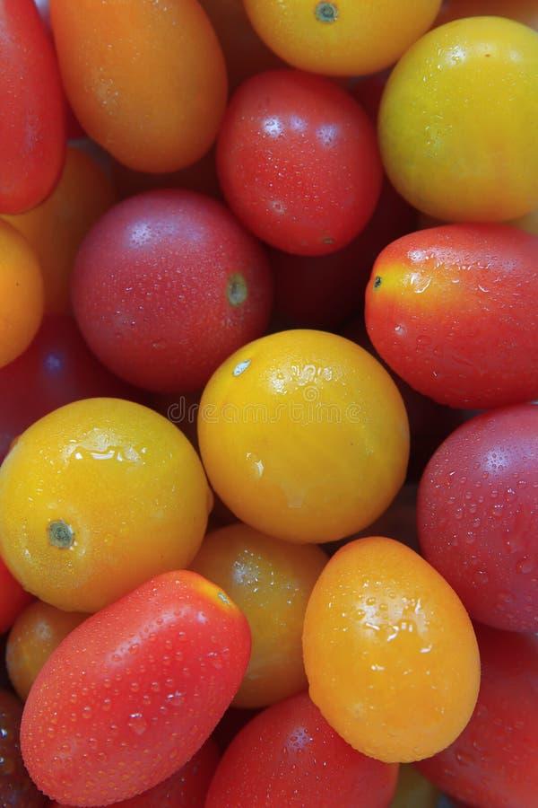 Разнообразие томатов вишни heirloom собранных совместно стоковые фотографии rf