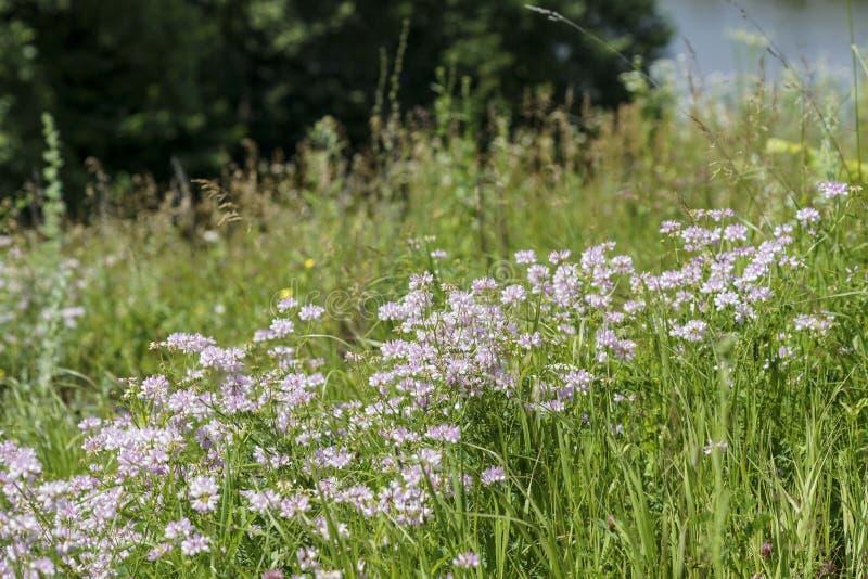 Разнообразие трава лета на предпосылке неба стоковые фото