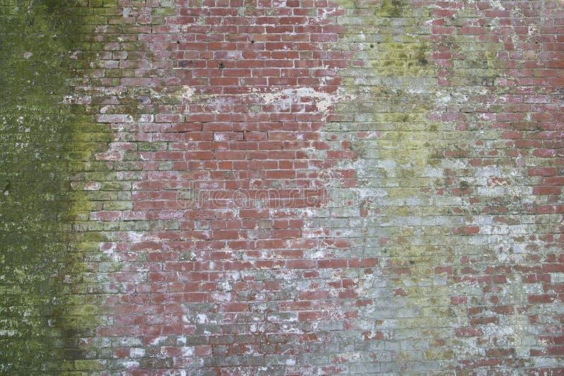 Разнообразная более старая красная кирпичная стена с зеленым мхом стоковые фото