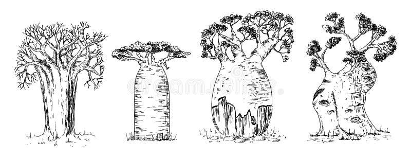 Разные виды африканского набора баобаба иллюстрация штока