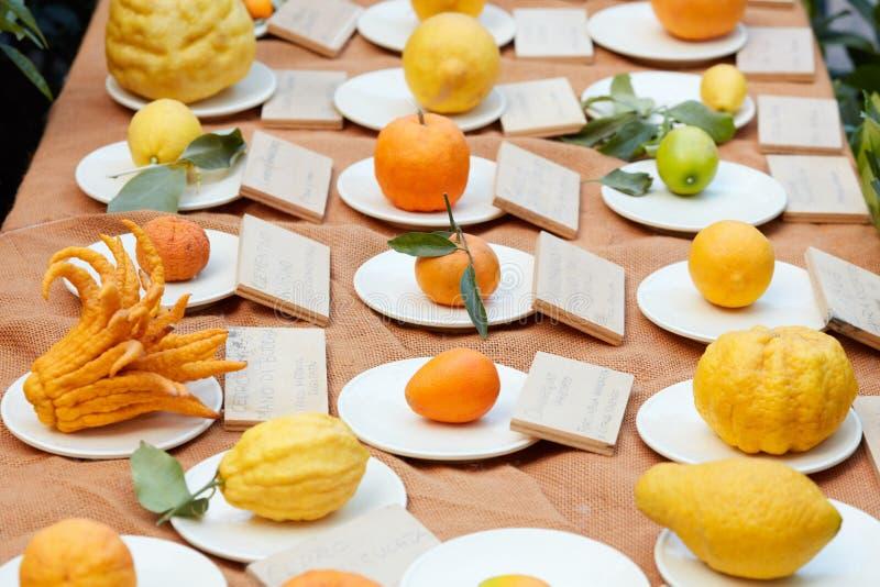 Разные виды цитрусовых фруктов на дисплее стоковые изображения rf