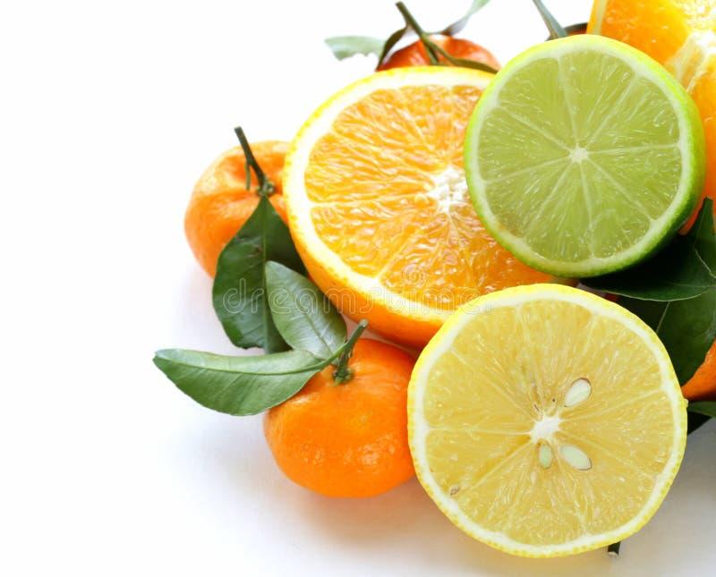 Разные виды цитрусовых фруктов стоковая фотография