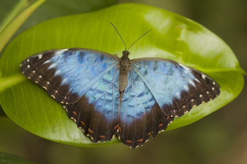 разрешение бабочки стоковое фото rf
