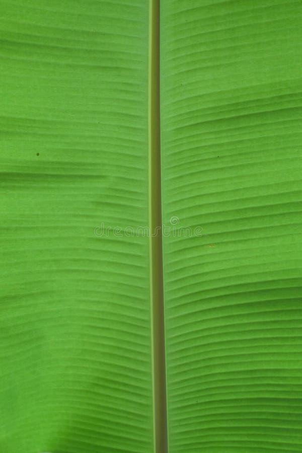 Разрешение банана стоковое изображение