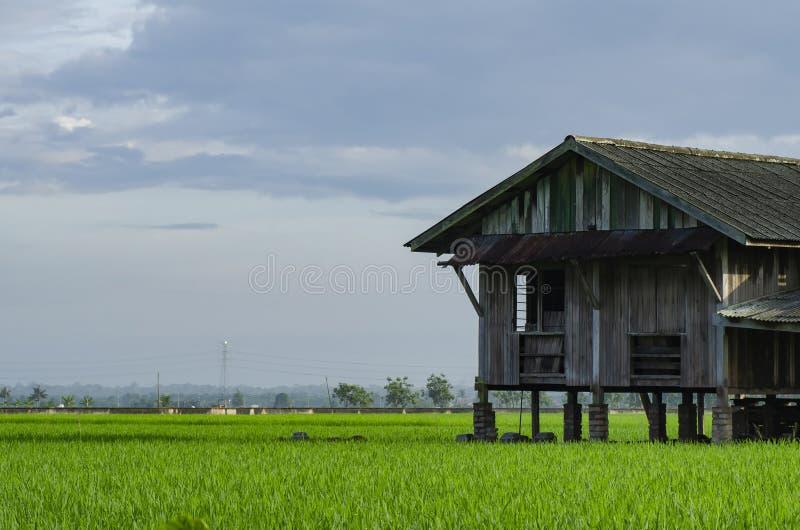 Разрушанные рисовые поля деревянного дома развязности окружающие стоковое фото rf