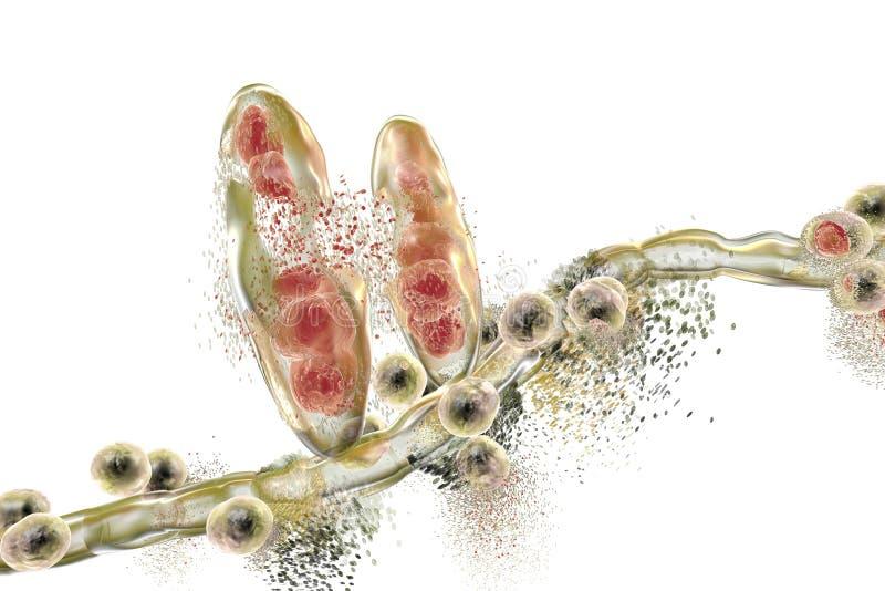 Разрушение грибка Trichophyton иллюстрация вектора