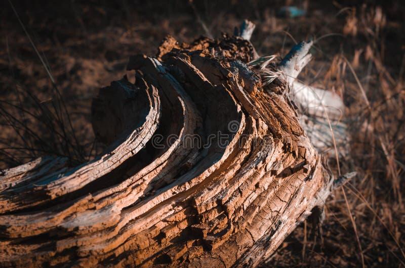 Разрушение дерева в слои под действием солнца окружающей среды, ветра, температуры, времени Разделять в ежегодное стоковое фото