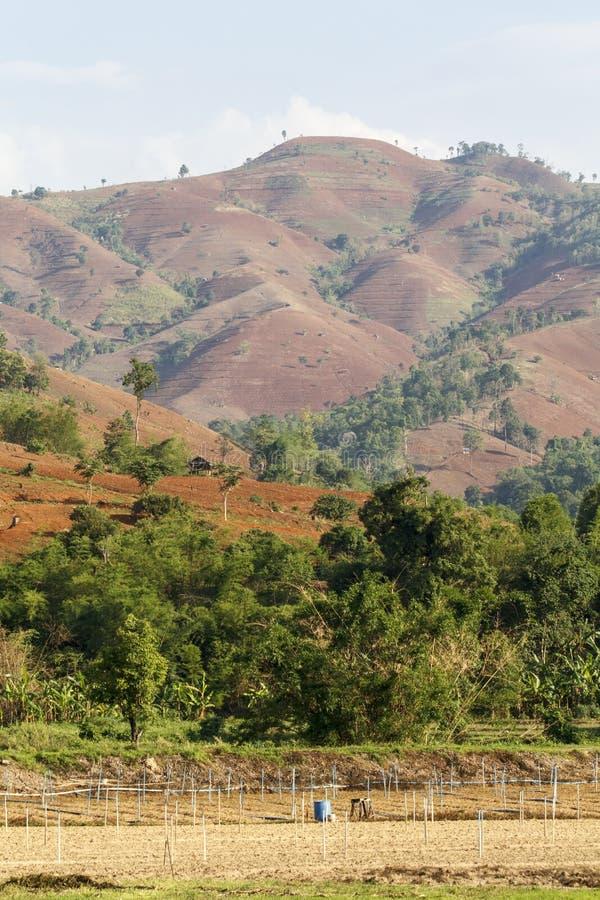Разрушение дождевого леса стоковая фотография