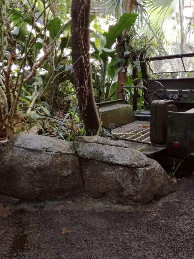 Разрушенный автомобиль в природе стоковая фотография rf