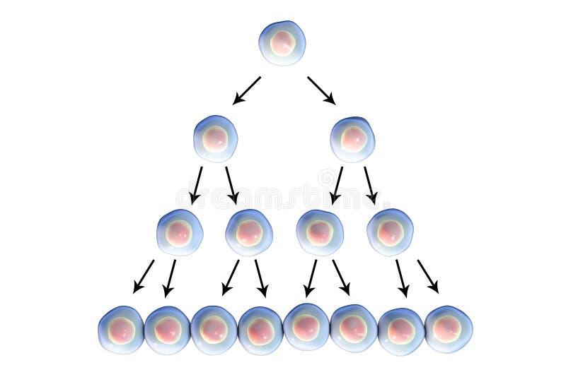 Разделение клетки, иллюстрация иллюстрация штока