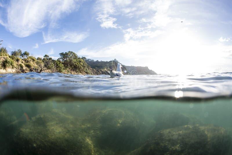 Download Разделенный взгляд с чайкой Стоковое Изображение - изображение насчитывающей вода, поверхность: 40589109