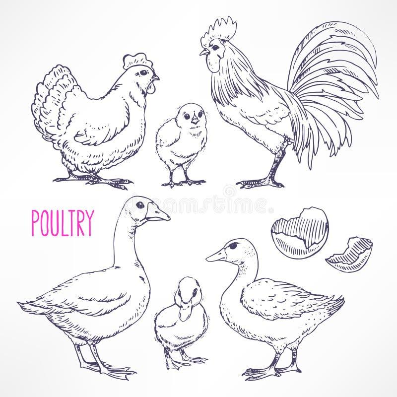 Различная птица иллюстрация штока