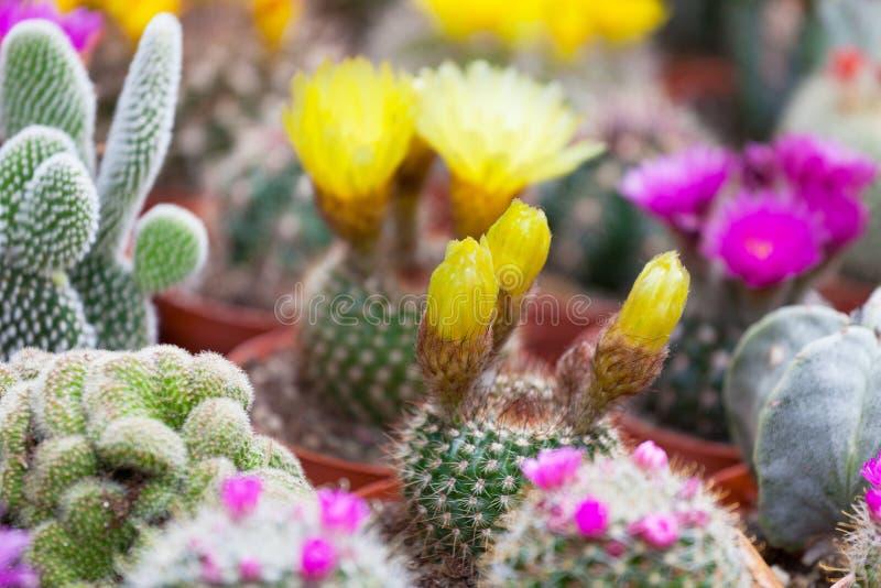 Различные кактусы стоковое изображение rf