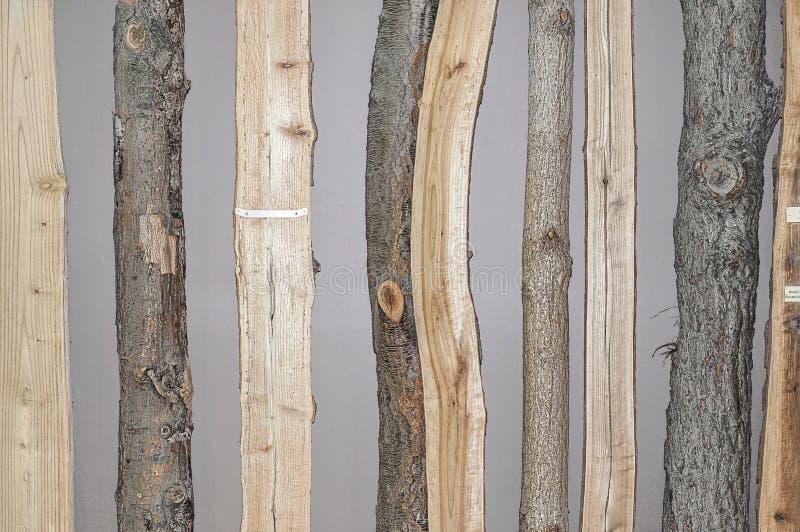Различные коры дерева и поперечные сечения стоковое изображение