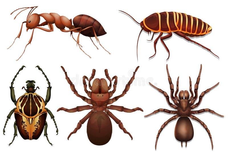различные насекомые иллюстрация штока