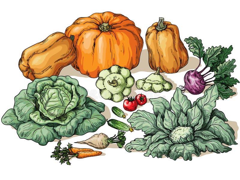 Различные овощи иллюстрация вектора
