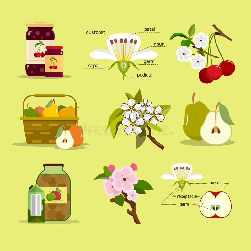 Различные плодоовощи и опарникы варенья Иллюстрация вектора в плоском дизайне стиля иллюстрация вектора