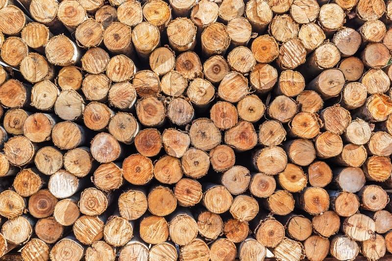 Различные разделы дерева стоковое изображение rf