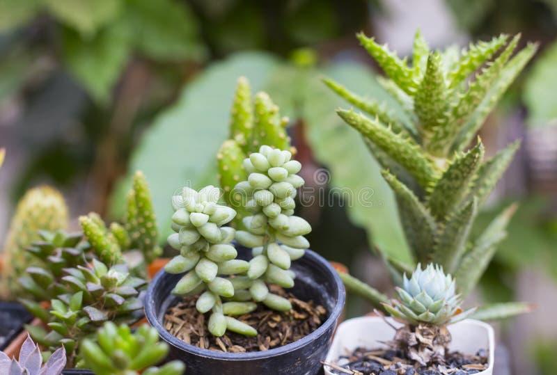 Различные сортированные малые succulents стоковые изображения