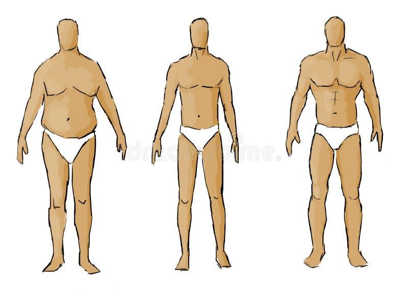 Download Различные типы телосложения Иллюстрация штока - иллюстрации насчитывающей диетпитание, тип: 33725471