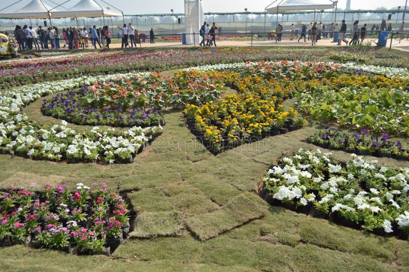 Различные цветки на выставке цветов, Ахмадабаде стоковая фотография rf