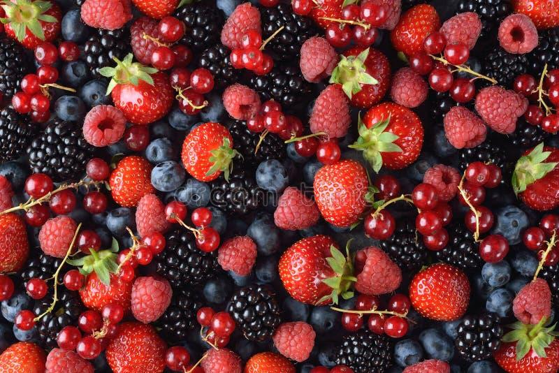 Различные ягоды леса стоковая фотография rf