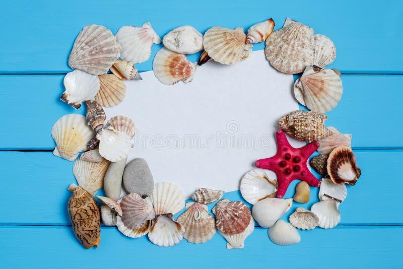 Различные seashells, морская рамка на бирюзе покрасили деревянную предпосылку стоковая фотография
