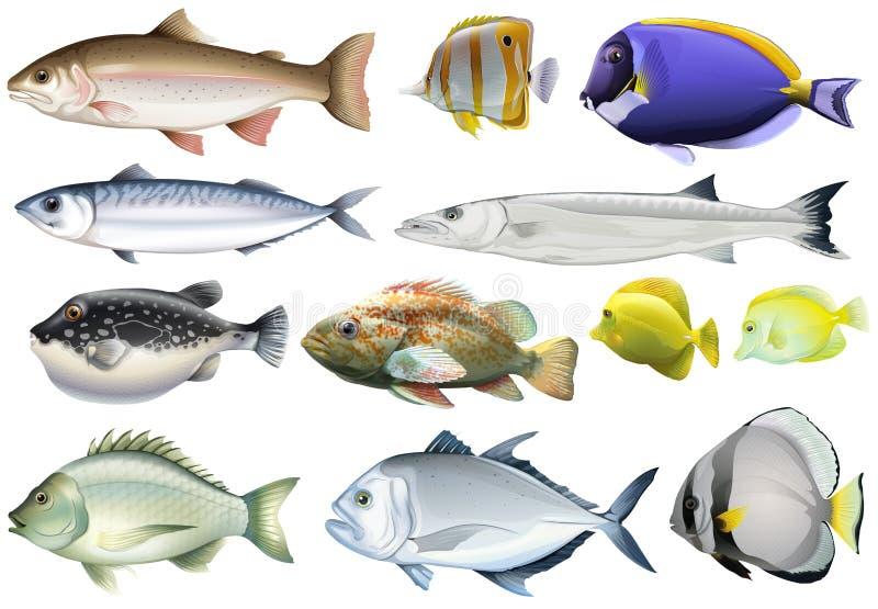 Различный вид рыб океана бесплатная иллюстрация