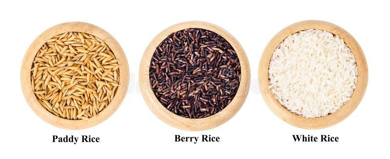 Различный риса ягоды, падиа, и белого риса в деревянном блюде стоковое изображение rf