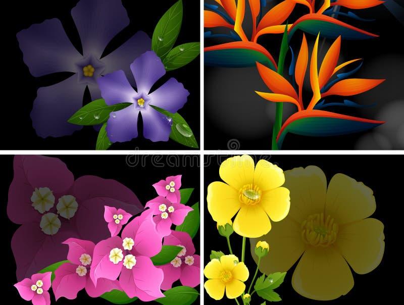 4 различных вида цветков на черной предпосылке бесплатная иллюстрация