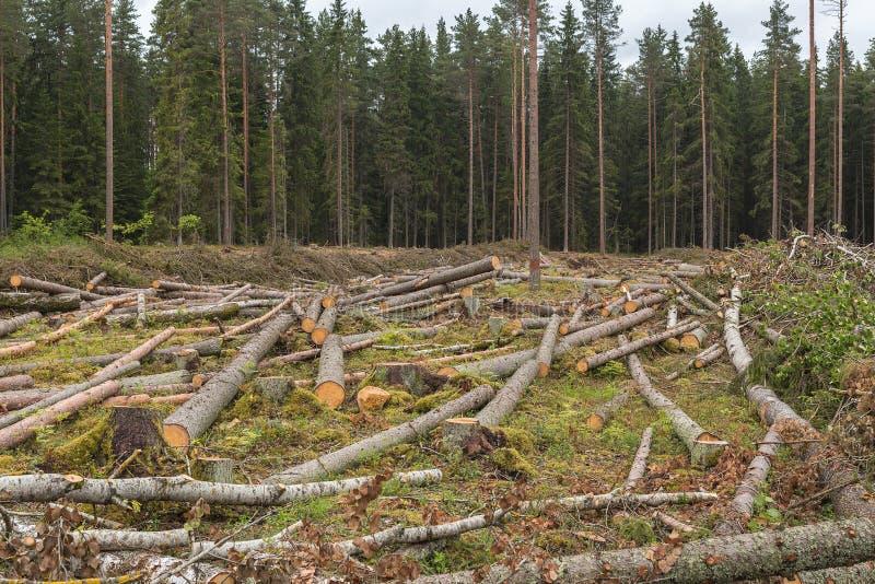 Район валить леса стоковое фото
