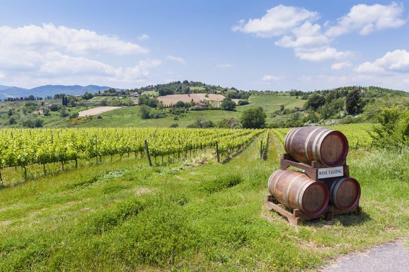 Район виноградника и дегустации вин в Тоскане стоковое фото rf