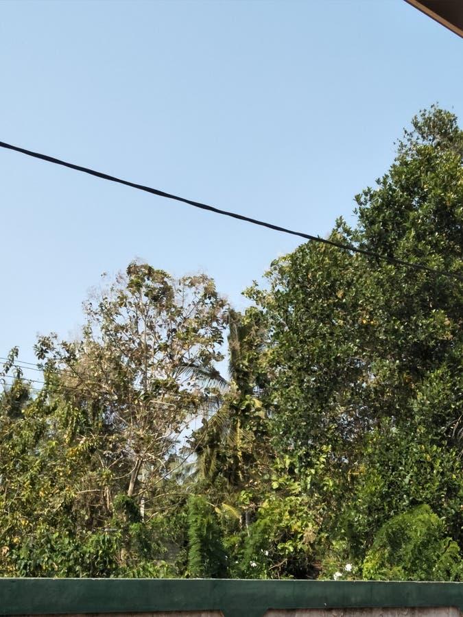 Район деревни Srilankan с лесом стоковая фотография