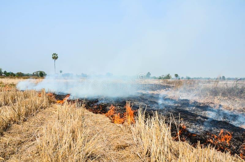 Район неорошаемого земледелия перед сезоном дождей стоковые фото
