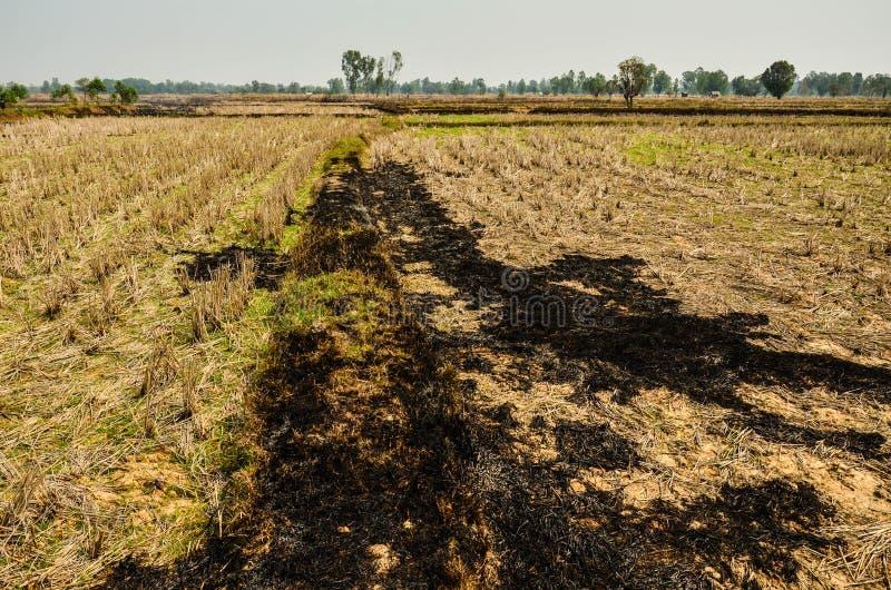 Район неорошаемого земледелия перед сезоном дождей стоковое фото