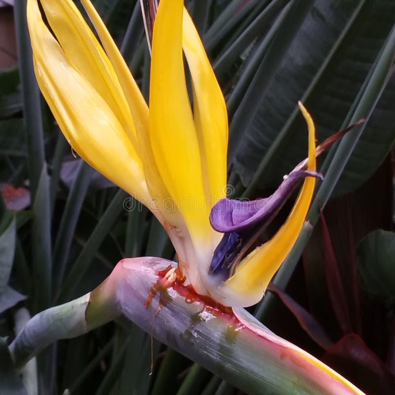 Райские птицы стоковое изображение