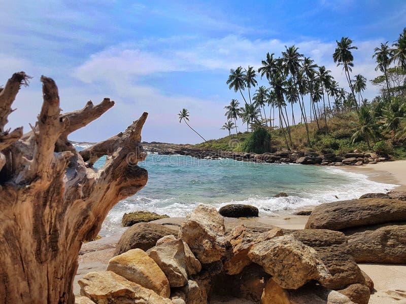 Рай ландшафта пляжа Азии Шри-Ланка стоковая фотография rf