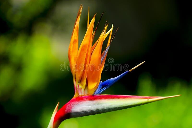рай птицы стоковые изображения