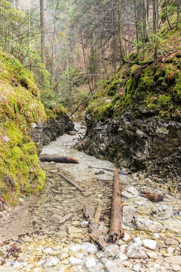 Рай Словакии - каньон реки Sucha Biela с туристским путем Пеший туризм в каньоне реки, лесные деревья на сторонах Beautif стоковая фотография