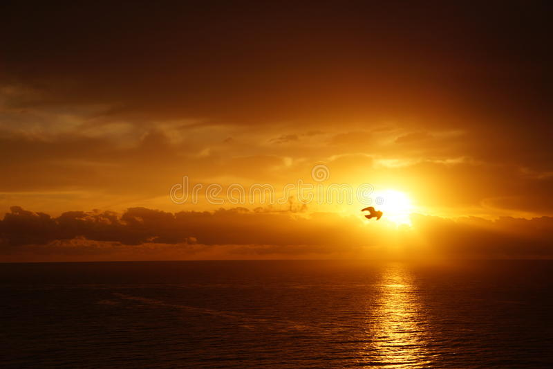 Рай утра стоковые фото
